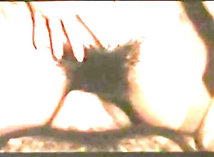 Facial,Giuseppe Curia,Guia Lauri Filzi,Sabrina Mastrolorenzi,Alfonso Gaita,Pauline Teutscher,Alessandra Messina,Bruno Mattei,Zaira Zoccheddu,Fernando Arcangeli Les Sodomaniaques